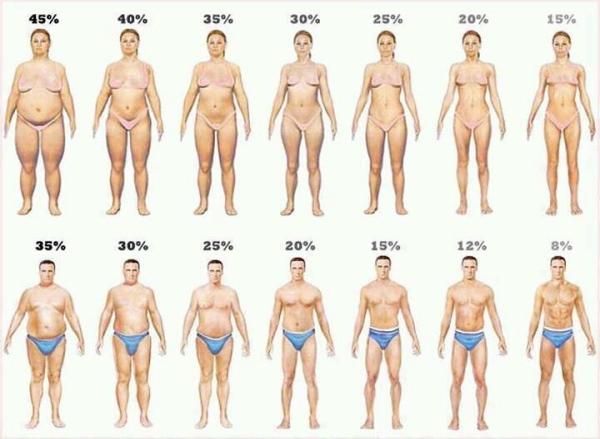 Body-Fat1.jpg